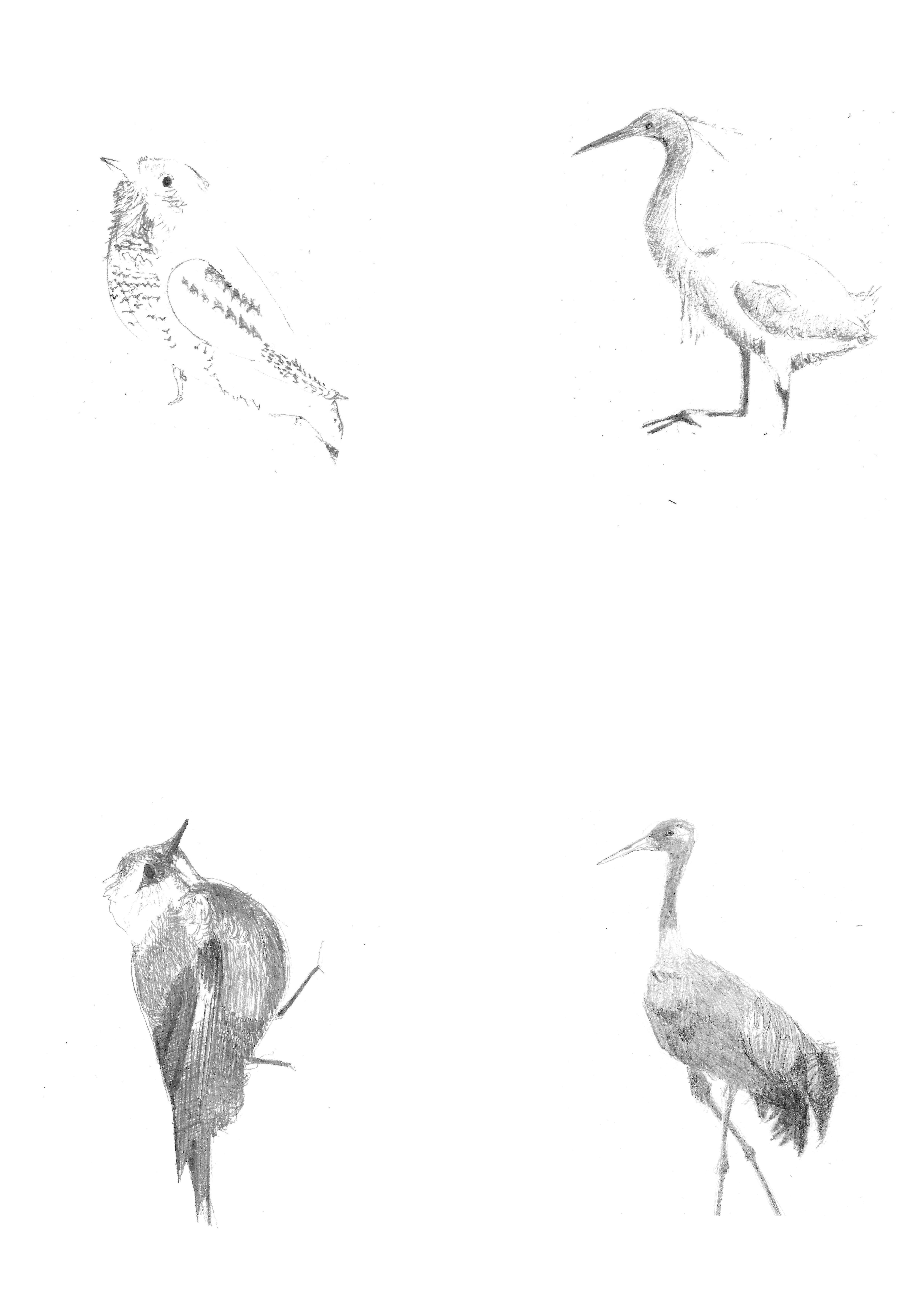Poissons oiseaux 4